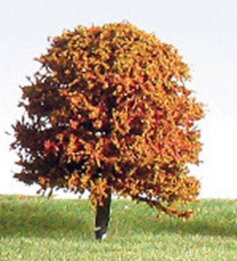 50mm Autumn/Blossom (Mixed Colours) Deciduous Tree