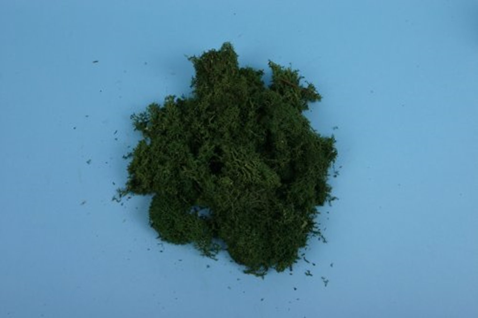 Lichen - Dark Green (80g)