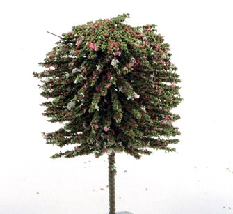 25mm Autumn/Blossom (Mixed Colours) Deciduous Tree