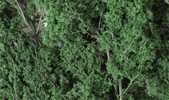 Dark Green Fine Leaf Foliage