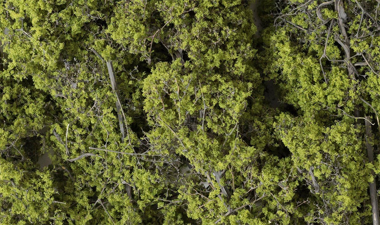 Light Green Fine Leaf Foliage