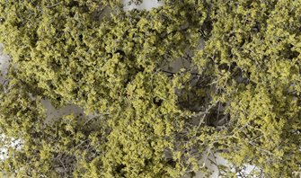 Olive Green Fine Leaf Foliage