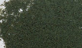 Conifer Green Foliage
