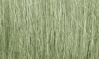 Light Green Field Grass