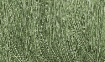 Medium Green Field Grass
