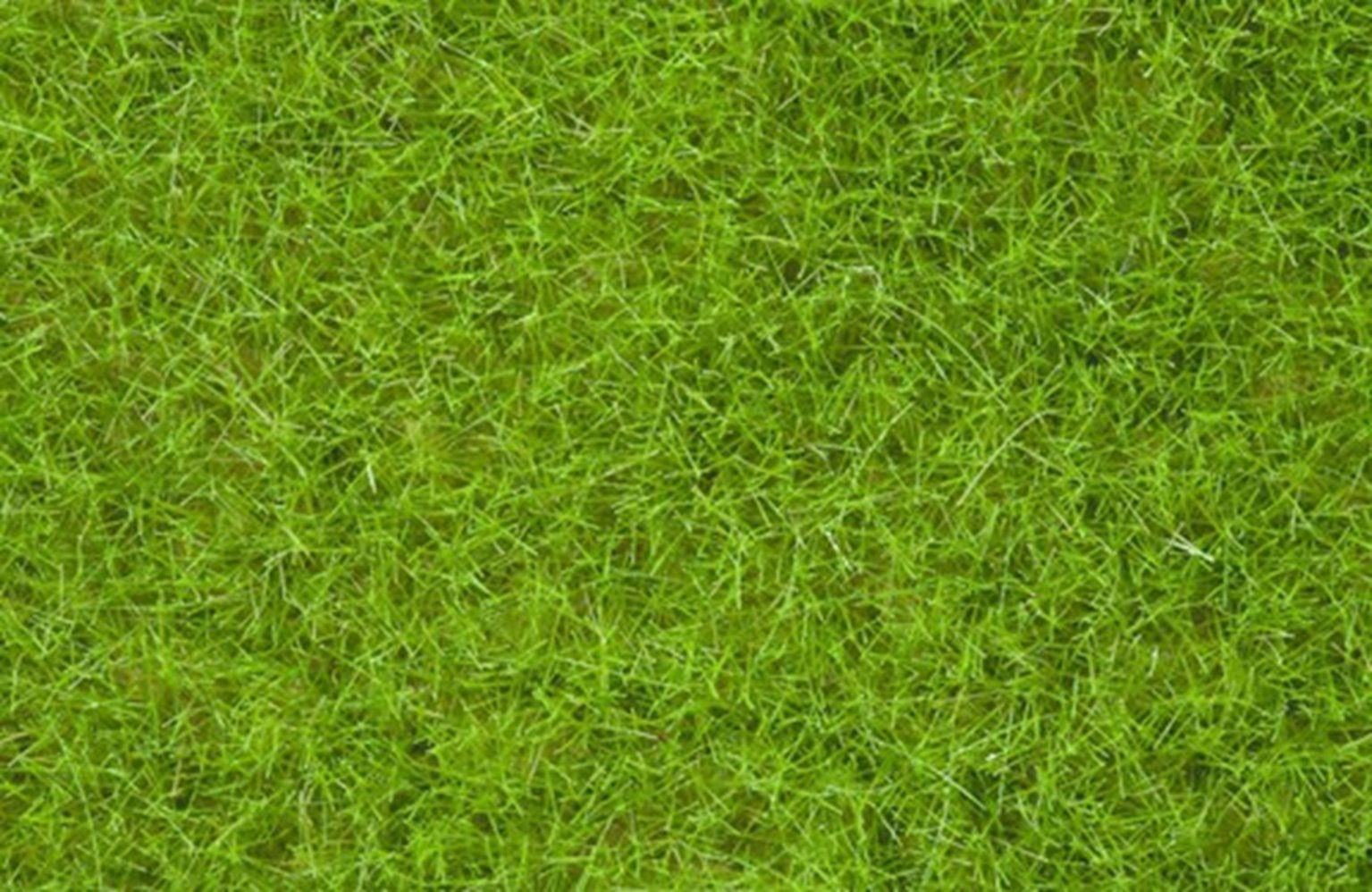 Light Green Wild Grass 6mm (100g)