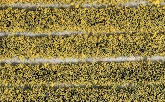 PSG-21 Pecoscene Tuft Strips 4mm Daffoldils (10)