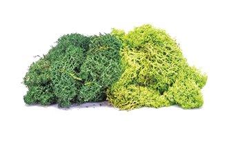 Lichen - Large Green Mix